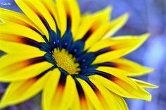 Flower like a Sun by Lana Hussain