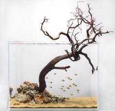 """Aquarium Design Group - """"Tree Pose"""""""