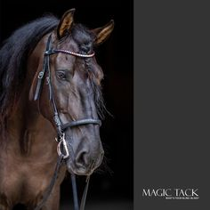Black horse with MagicTack browband Equestrian Style, Dressage, European Fashion, Outfit Of The Day, Swarovski Crystals, Fashion Accessories, Bling, Horses, Today's Outfit