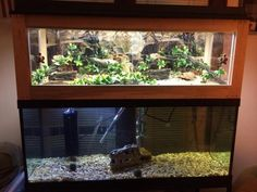 Terrific Photo Turtles Pet aquarium Tips Turtles live mainly in water. They'll need an aquarium of at least 29 gallons, with a screened top Turtle Aquarium, Aquarium Ideas, Aquatic Turtle Tank, Aquatic Turtles, Turtle Tanks, Fish Tanks, Baby Tortoise, Tortoise Care, Backgrounds