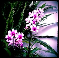 Mas orquideas
