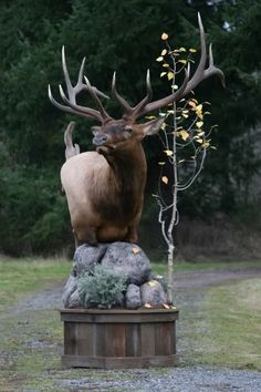 Really Nice Elk Pedestal Mount