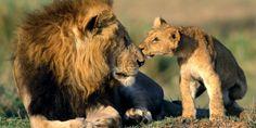 1 Milhão para proibir o comércio de leões – em toda a imprensa!