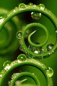 dew drops                                                                               More