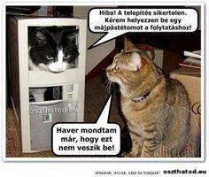 vicces macskás képek szöveggel - Google keresés