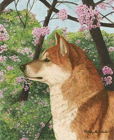 Cherry Blossoms Shiba Inu giclee print by by PawprintsPortfolio, $34.95