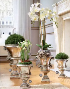 Urns with bulbs, orchids, green moss