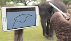 elephant use smartphone (samsung galaxy note)