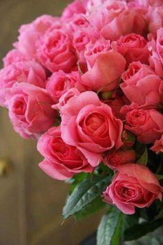 My favorite flowers♡♡♡ My Flower, Pretty Flowers, Pink Flowers, Bloom, Rosa Rose, Mothers Day Flowers, Rose Bouquet, Beautiful Roses, Beautiful Flowers Images