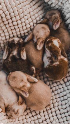 Baby Farm Animals, Cute Wild Animals, Baby Animals Super Cute, Cute Baby Bunnies, Cute Baby Dogs, Baby Animals Pictures, Cute Dogs And Puppies, Cute Little Animals, Cute Animal Pictures