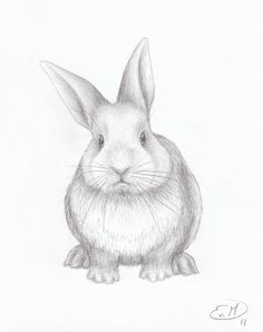 cute bunny pictures to draw - Google Search