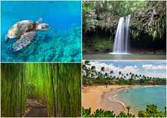 We're getting very excited for our trip to Maui, which is now less than two weeks away!In addition to beach hopping and doing absolutely nothing, we hope to experience as much of this beautiful is...