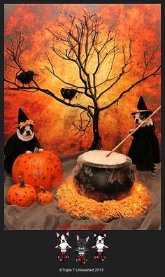 Halloween Bostons