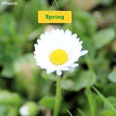 #sensefiltre #taradell #totpassejantelgos #flors #plantes #Catalunya #paíspetit #naturalesa  #flora #Maigl2016 #primavera #fotografia #flowers #plants  #Catalonia  #nature #spring #Mayl #instagood #macro #canon #photograph