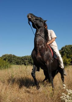 Tips for Riding a Spooky Horse