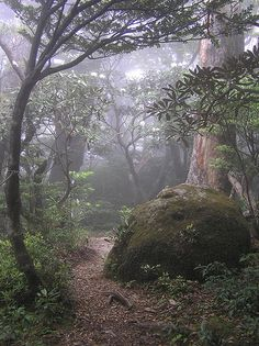 This looks just like a magic forest from a fairy tale. It's real, it's the island Yakushima in Japan.