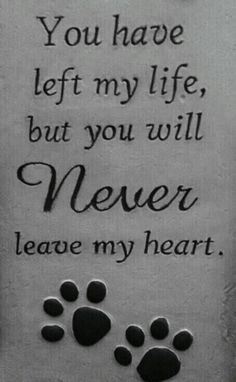 Cooter Brown my precious boy. I will love and miss you til I die.Cooter Brown my precious boy. I will love and miss you til I die. Dog Quotes Love, Sad Quotes, Qoutes, Dog Tattoos, Cat Tattoo, True Tattoo, Tattoo Quotes, Quotes Arabic, Death Quotes