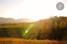 Santa Ynez Valley Vineyard