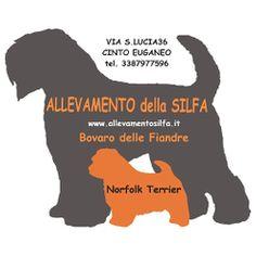 http://www.allevamentosilfa.it/