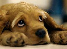 Ayudar a tu perro a superar la muerte de otro can