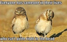 funny animal jokes pictures
