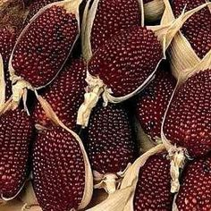 Mays Seed - Strawberry Corn Seeds lovely two inch strawberry popcorn!lovely two inch strawberry popcorn! Fruit Plants, Fruit Garden, Edible Garden, Fruit Trees, Fruit And Veg, Fruits And Veggies, Vegetables, Strawberry Popcorn, Rainbow Corn