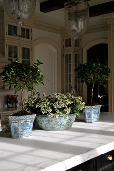 Magnolia topiaries in magnificient blue and white containers