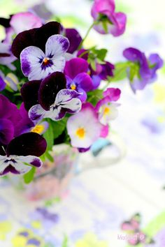 ♡ Violets are are a super spring time flower!!  These and pansies were Grandmas favorite.