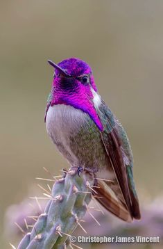 Hummingbird ❤❤♥For More You Can Follow On Insta @love_ushi OR Pinterest @anamsiddiqui12294 ♥❤❤