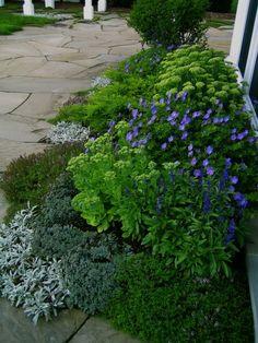 3 types of sedum, veronica incana, lemon thyme, salvia farinacea, a yellow tipped juniper and dwarf korean lilac