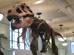 List of Best Museums In New York City - Famous Museums NYC