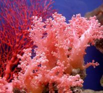 Most species of coral live in the photic zone, which is the ocean layer that can still be penetrated by light from the sun. Live Coral, Coral Pink, Coral Art, Poisson Mandarin, Fauna Marina, Underwater Life, Underwater Plants, Saltwater Aquarium, Reef Aquarium