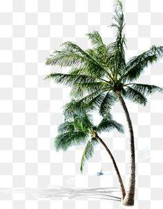 沙滩上的椰树