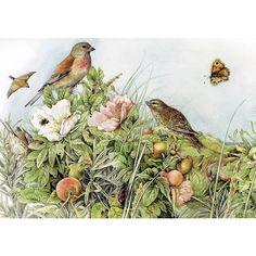 MARJOLEIN BASTIN (born 1943 in Loenen aan de Vecht) is a Dutch noted nature artist, writer, children's author and illustrator. Art Et Nature, Nature Artists, Marjolein Bastin, Nature Sketch, Motifs Animal, Dutch Artists, Children's Book Illustration, Art Pages, Bird Art