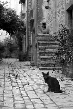 Chat noir by fabienépé, via Flickr