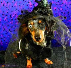 Dark witch dog cute animals witch halloween costume ideas dog costumes, pet costume ideas