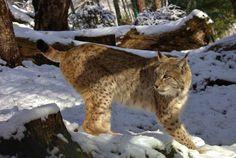 Animales en los Pirineos.