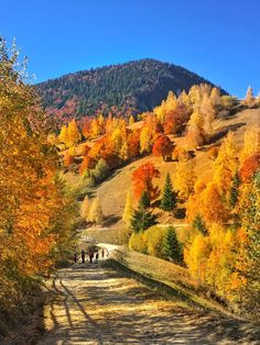 We are pleased to announce that anytime is the best time to visit Transylvania. Luckily, Romania has a climate that allows you to travel in all seasons. Landscaping Around Deck, Country Landscaping, Village Photography, Romania Travel, Autumn Scenery, National Parks Usa, Autumn Cozy, Beautiful Landscapes, The Great Outdoors