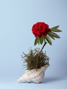 This Photographer Arranged Botanical Abortifacients Into Stunning Floral Designs in a Timely Show About a Woman's Right to Control Her Fertility Collections Photography, Photography 2017, Artistic Photography, Photography Composition, Creative Background, Still Life Photographers, Jewelry Editorial, Abortion Debate, Ikebana