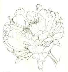 Flower |Pinned from PinTo for iPad|