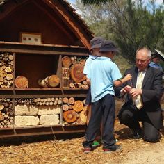 Solitary native bees come together at the bee hotel in Canberra's Australian National Botanic Gardens.