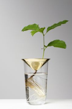 Michael Anastassiades: Floating Forest Series — Thisispaper — What we save, saves us.