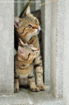 the cats whisperer | Stray Cats