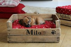 antique wooden crates ideas | Vintage Crate Contemporary Small Dog Bed / This is a great idea!  :)