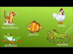37 Ideas De Reino Animal Reino Animal Clasificación De Animales Vertebrados E Invertebrados