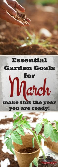 Gardening goals for March - without goals, you're gardening without a purpose!