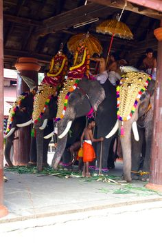 Elephants in the Temple