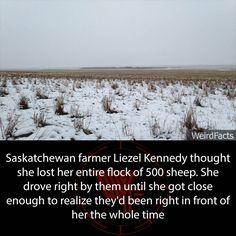 Weird World — Saskatchewan farmer Liezel Kennedy thought she...