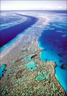 Animal Planet :: News :: Australia Protects Reef I want to snuba or snorkel here SOON!