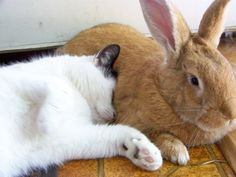 cat loves bunny